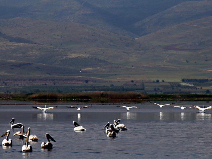 Işıklı Gölü ve Kuşlar